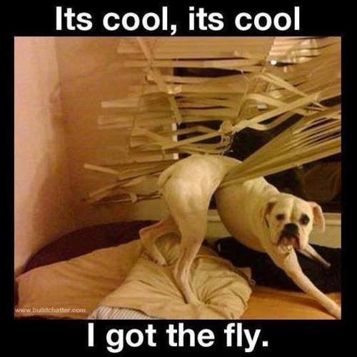 I-got-the-fly
