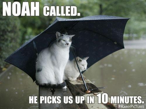 Noah-Called-FF